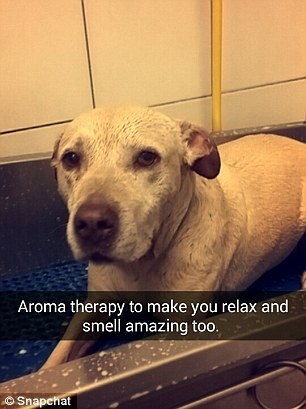 Cô chó nhỏ đã được tắm táp thơm tho.