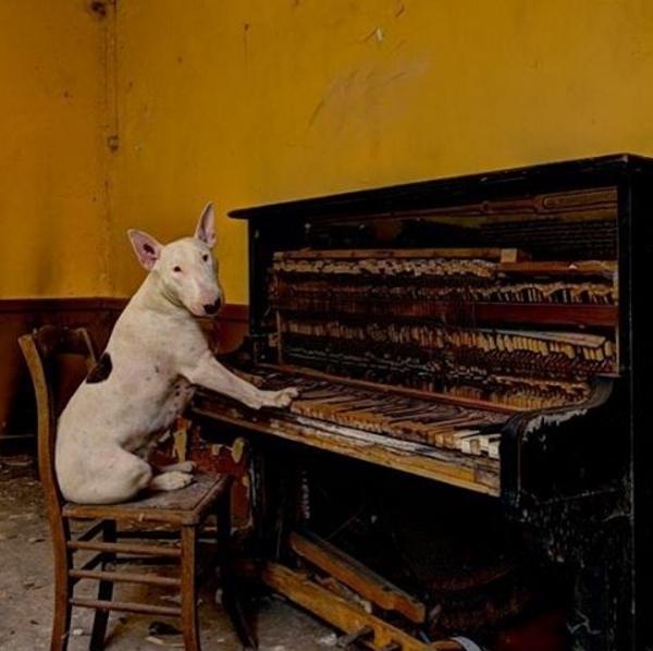 Rồitập tành chơi vài bản nhạc nhẹ.