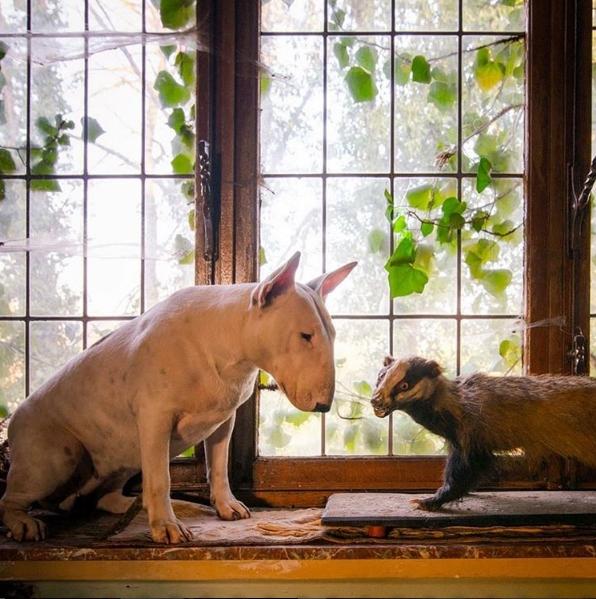 Thỉnh thoảng cónhững người bạn nhỏ đến thăm.