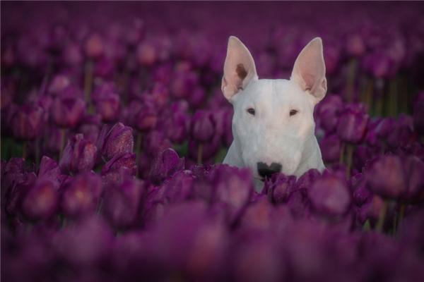 Là đượctìm về cánh đồng hoa tím lung linh.