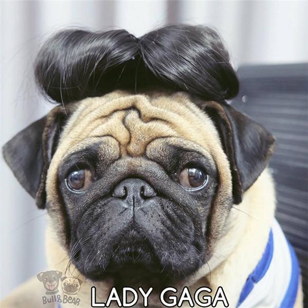 """Bear mà sinh cùng thời với RiRi hay Lady Gaga thì mấy gái không có cửa mà nổi với """"chụy"""" đâu nhé."""