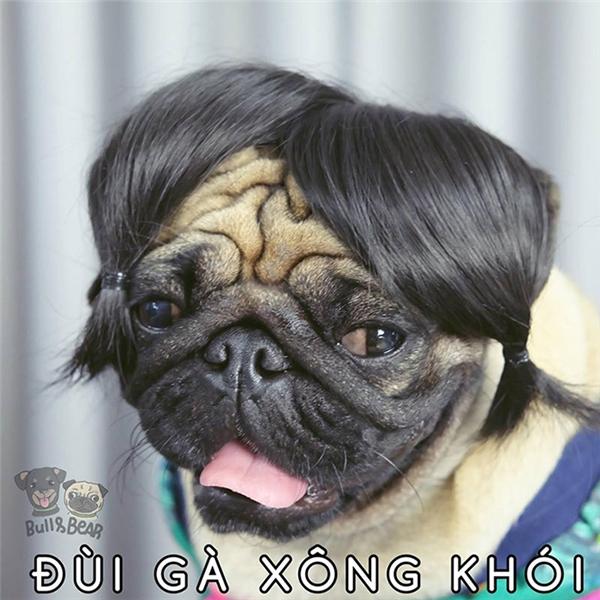 Biến tấu từ tóc đùi gà kinh điểncủa Cô Long.