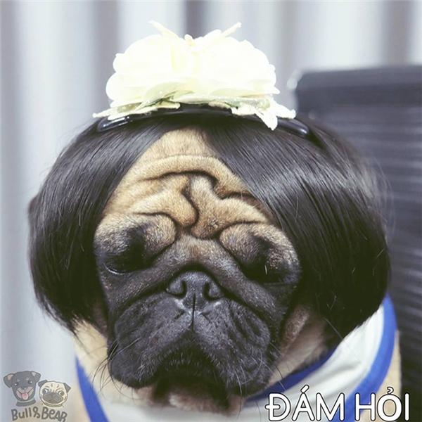 Hot girl cún khuấy đảo xuân hè 2017 với các kiểu tóc đẹp hơn bản gốc