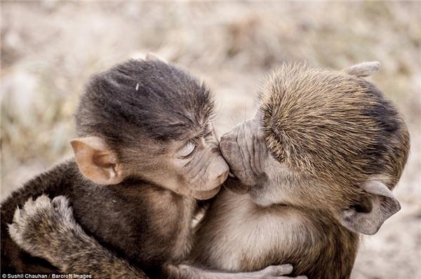 Động vật cũng biết cách yêu lắm chứ.