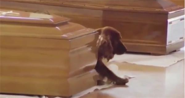 Một chú chó lặng lẽ bước đến quan tài chủ nhân của nó...