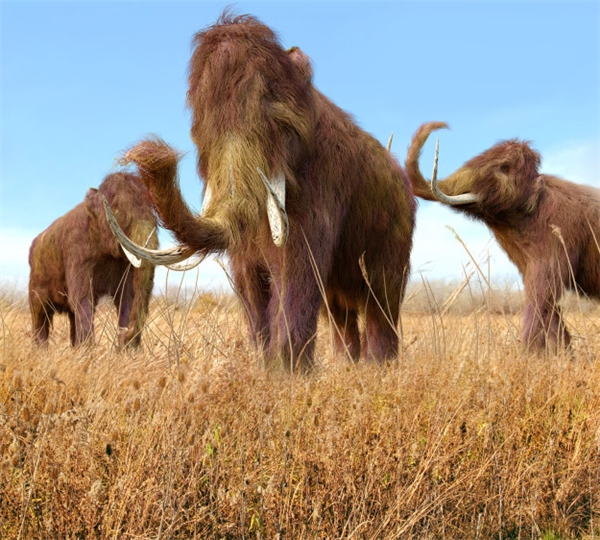 #3 Đừng nghĩ voi ma mút đã bị tuyệt chủng từ lâu lắm rồi nhé, bởi khi con voi ma mút cuối cùng chết, Kim tự tháp đã tồn tại 1000 năm rồi đấy. (Ảnh: BuzzFeed)
