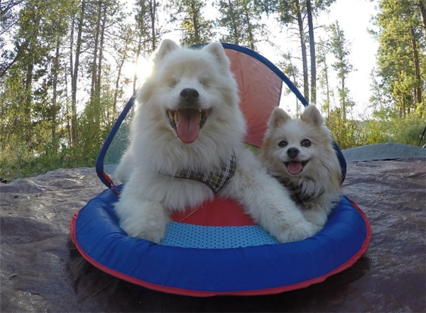 Câu chuyện về chú chó mù và người bạn dẫn đường tuyệt vời