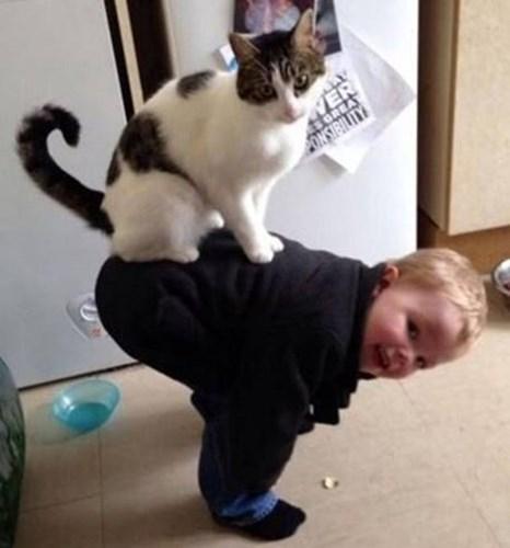 Bức ảnh hùng hồn nhất chứng minh mèo đang làm bá chủ nhân loại.