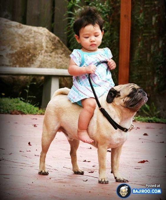 Trong khi đó, chó vẫn là loài thú cưng trung thành đáng tin cậy và... giỏi chịu đựng con người nhất.
