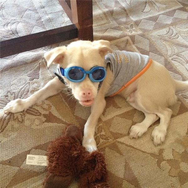 Hầu hết những chú chó bị MPS VI thường không sống hơn 2 năm, nếu sống được lâu cũng sẽ gặp những biến chứng gây đau đớn suốt cả đời.