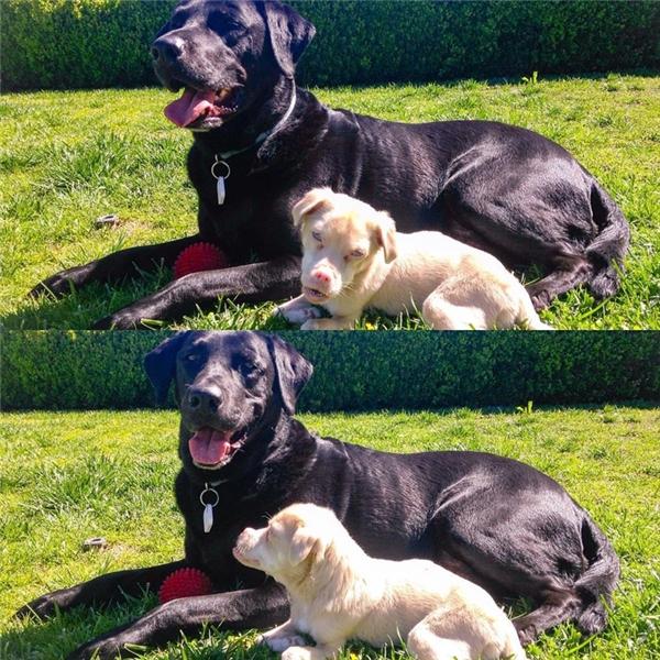 Dù mắc bệnh hiểm nghèo thế nhưng Tucker lại sống vô cùng vui vẻ, thường xuyên vui đùa với chủ cũng như với các bạn chó khác.