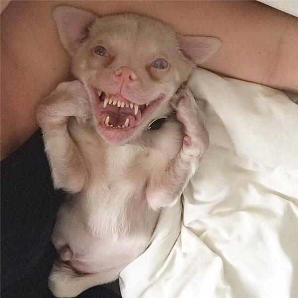 Ai cũng nghĩ chú chó này trông ngớ ngẩn, đặc biệt khi nhìn vào nụ cười ngoác mõm giống như con cóc đó.
