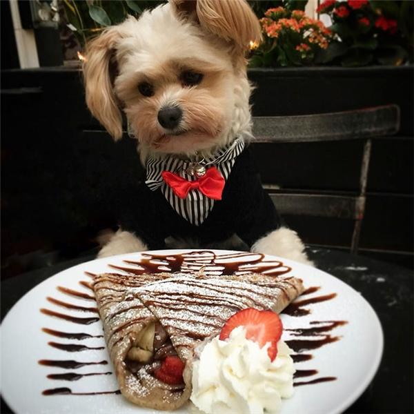 Popeyeđược diện đồ đẹp đến những nơi sang chảnh và chụp ảnh cùng những món ăn ngon. (Ảnh: Instagram)
