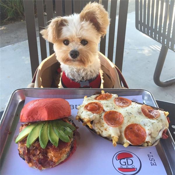 Chú chó sống ảo gây bão mạng xã hội bởi sở thích chụp hình với đồ ăn