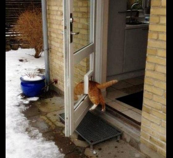 Đừng vội đánh giá loài mèo phi logic qua bức ảnh này. Chẳng qua cô nàng muốn kiểm tra số đo vòng bụng của mình mỗi ngày thôi.