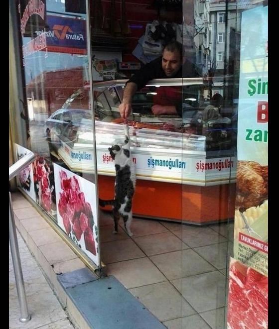 Bác ơi, bán cho mèo 2 đồng xúc xích cá.