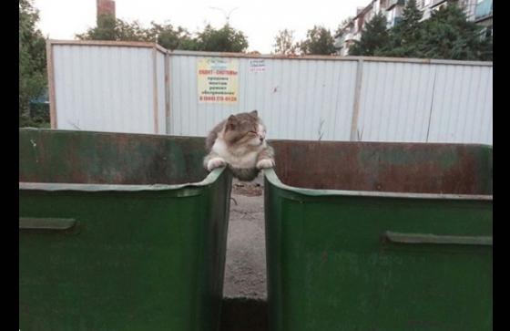 Một cách khẳng định chủ quyền ở 2 cáithùng rác rất khôn ngoan.
