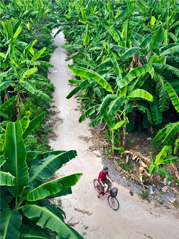 Ảnh 5: Con đường màu xanh - Nhen Lam