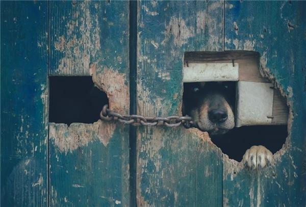 Ảnh 13:Tự do trong khuôn khổ - Tuấn Nguyễn Minh