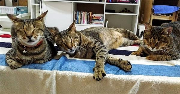 """""""Nhưng tôi không thể chịu đựng được việc phải chia cắtba anh em chúng.""""–Magnokể lại việc nhận nuôi cả ba anh em mèo mù. (Ảnh: The Dodo)"""
