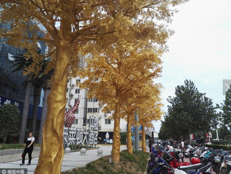 Choáng với hàng cây phủ vàng ròng trồng giữa đường phố