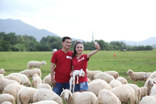 """Không chỉ khiến giới trẻ """"đứng ngồi không yên"""", cánh đồng cừu ở Suối Nghệ còn là địa điểm chụp ảnh cưới lí tưởngthu hút nhiều cặp đôi tìm đến."""