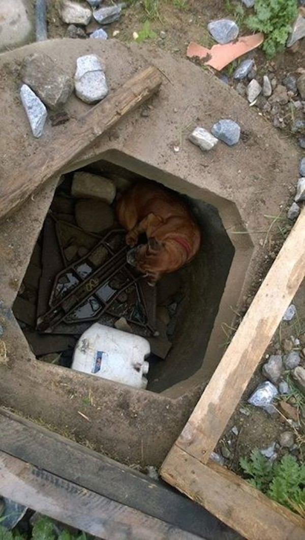 Tình cảnh đáng thương của cô chó khi mớiđược bé gái 6 tuổi phát hiện.
