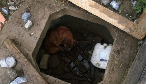 Cô chó bị người chủ nhẫn tâm bỏ rơi dưới hố, mặc cho nó chết đói.