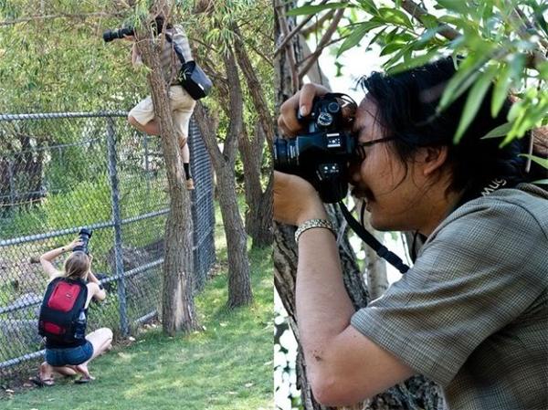 Một khi nhiếp ảnh gia đã muốn thì thành vách nào cũng không ngăn được họ.
