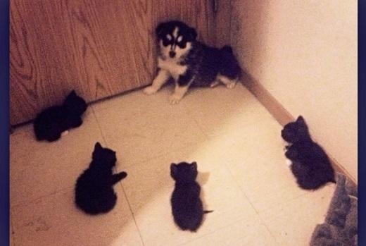 Bọn mèo ỷ đông hiếp yếu kìa, bớ người ta!