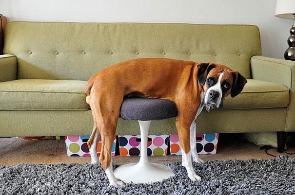 Hờn cái ghế này cả đời.