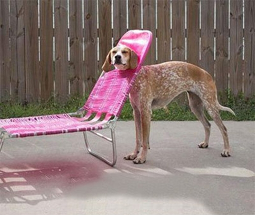 Ghế này hình như không phải được dùng như vậy nhỉ?!
