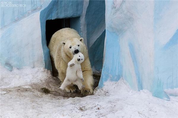 Gấu con vui vẻ, thoải mái với cách chiều chuộng của mẹ.