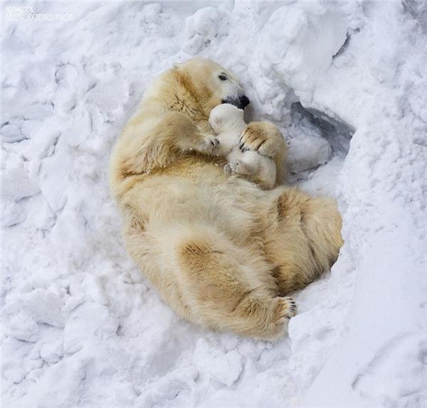 Trong vòng tay mẹ, gấu con thật nhỏ nhắn, bé bỏng đến nhường nào.