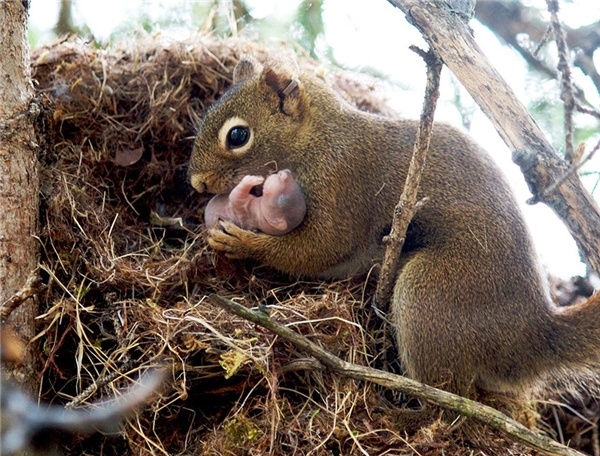Tình mẫu tử thiêng liêng thể hiện thật đẹpở cáchsóc mẹ nâng niu nhẹ nhàng và truyền hơi ấm chođứa con sơ sinh của mình.