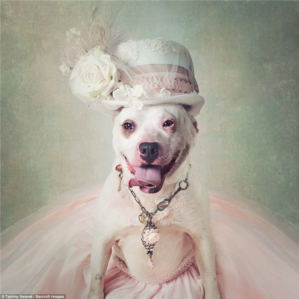 Xúc động câu chuyện đằng sau bức ảnh đáng yêu của những chú chó hoang
