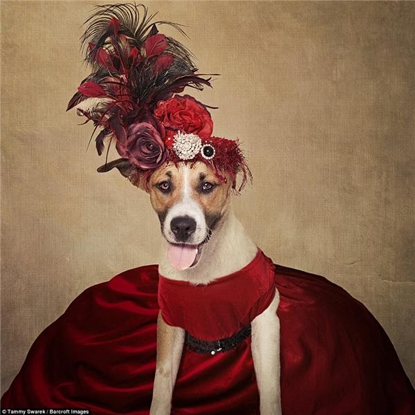Những bức ảnh chân dung độc đáo này sẽ góp phần tăng cơ hội được nhận nuôi cho các chú chó. (Ảnh: Tammy Swarek)