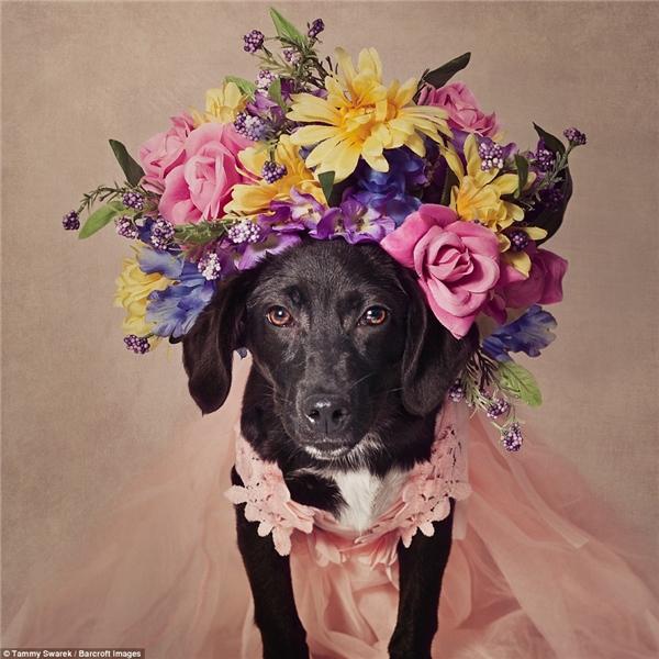 Những gì Tammy làm cho những chú cún này thật sựlà mộtliệu pháp cho nỗi đau đến từ việc nhìn những người thân yêu nhất của cô chống chọi với bệnh tật mỗi ngày.(Ảnh: Tammy Swarek)