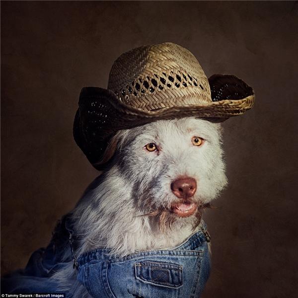 Mỗi chú chó được ăn mặc theo đúngcá tính của mình.(Ảnh: Tammy Swarek)
