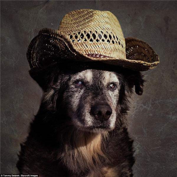 Các chú chó từ đây sẽ không còn buồn bã nữa...(Ảnh: Tammy Swarek)