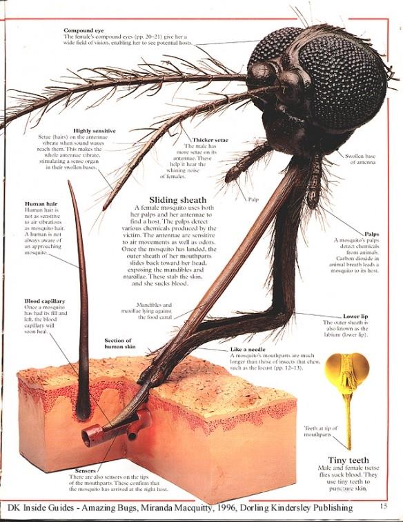 Đánh bay cảm giác ngứa ngáy vì muỗi đốt chỉ với vài chiêu đơn giản