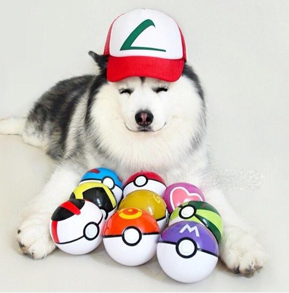 Maru là một trong những game thủ Pokemon Go cừ khôi đó.
