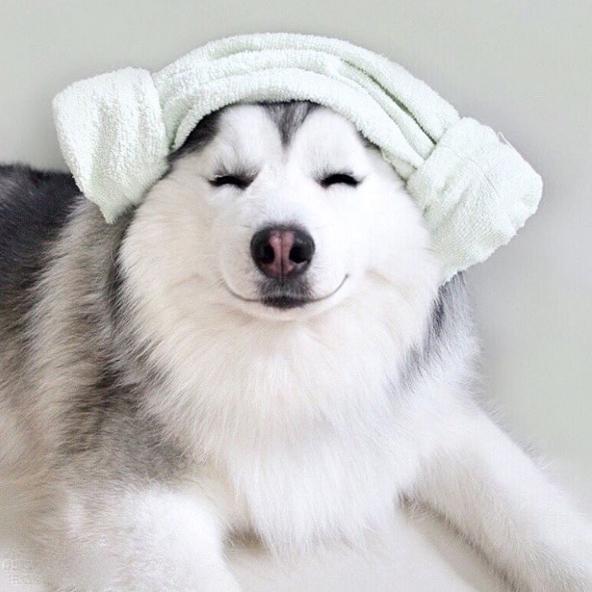 """""""Cả lúc mới tắm xong, Maru cũng tự thấy mình tỏa sáng lung linh nữa các bạn à""""."""