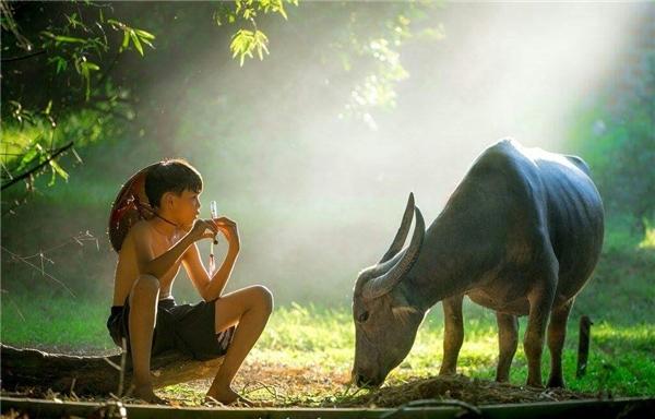 Ngắm đã mắt 20 bức ảnh về phong cảnh Việt Nam đẹp mê hồn