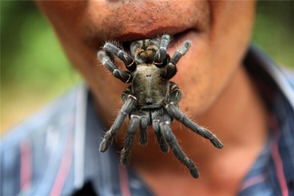 Đặc biệt, ở Skuon có rất nhiều những con nhện đen lớn xuất xứ từ Nam Âu, cũng là một đặc sản của thị trấn.