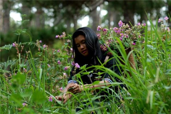 Loài hoa tím mộng mơ dịu dàng như cô sơn nữ.(Ảnh: FB Làng Cù Lần)