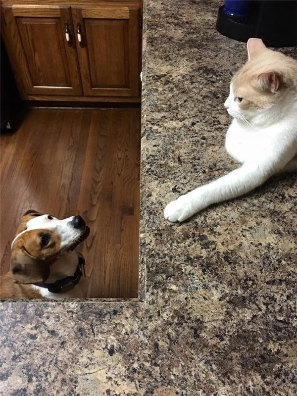 """Chàng mèo Pooh luôn tìm cách """"bơ"""" Pippy mỗi khi cô nàng lại gần.(Ảnh: The Dodo)"""