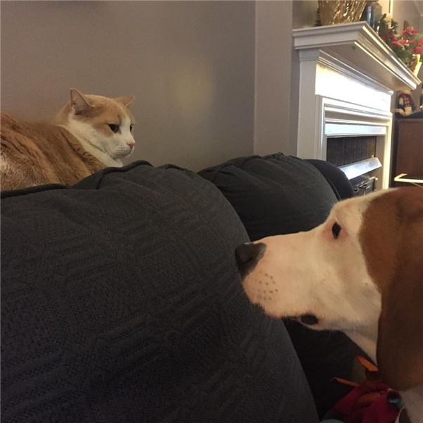 Tình yêu ngang trái của nàng cún si tình và chàng mèo băng giá