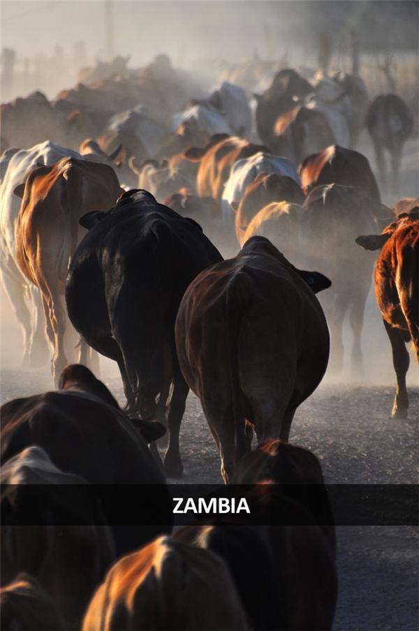 Một nơi nào đó ở Zambia.