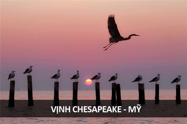 """Giờ cao điểm ở Vịnh Chesapeake, hết chỗ """"đậu xe""""."""